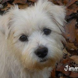 Maryland Westie Rescue (MWR)